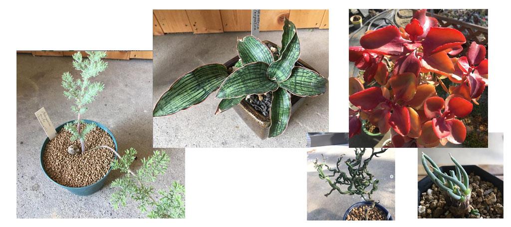 レアもの植物