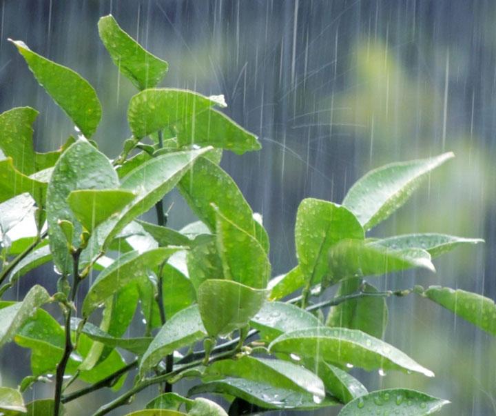 梅雨の植物