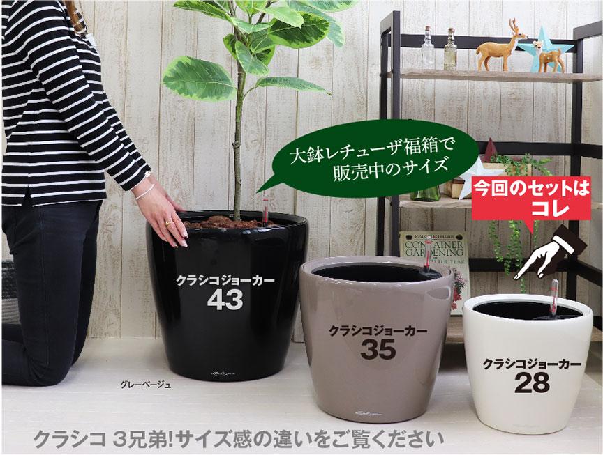 レチューザ【クラシコジョーカー28】福袋