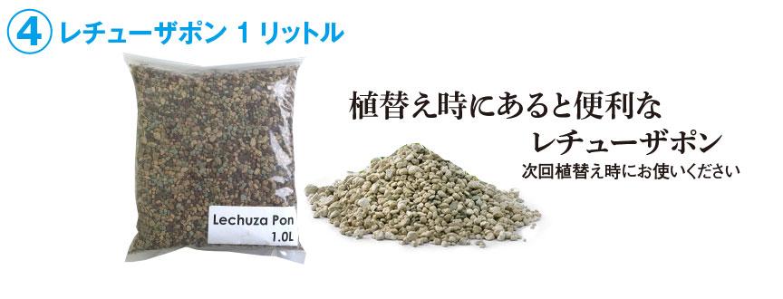 レチューザ【デルティーニ】福袋