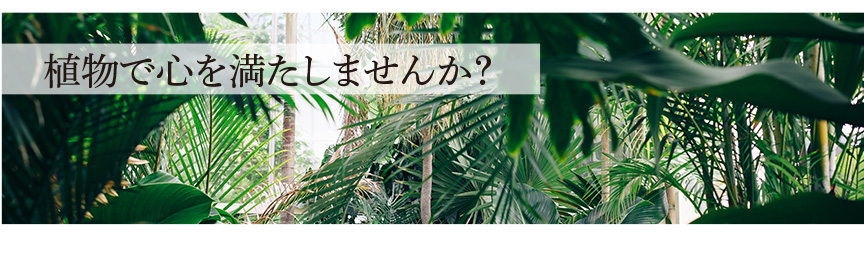 植物で心を満たしませんか?