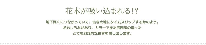 プラストコレクション【タムボ】